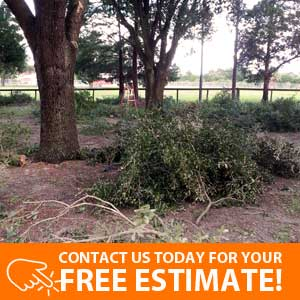 Tree Trimming and Branch Removal Service